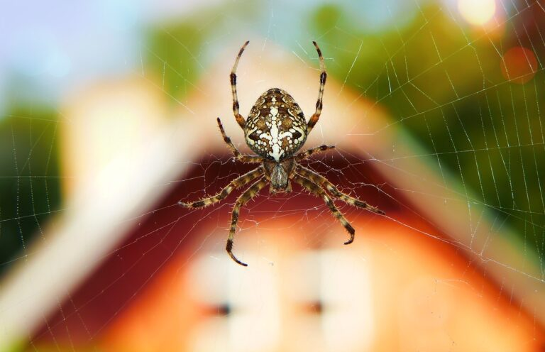 Comment se débarrasser des araignées dans la maison ?